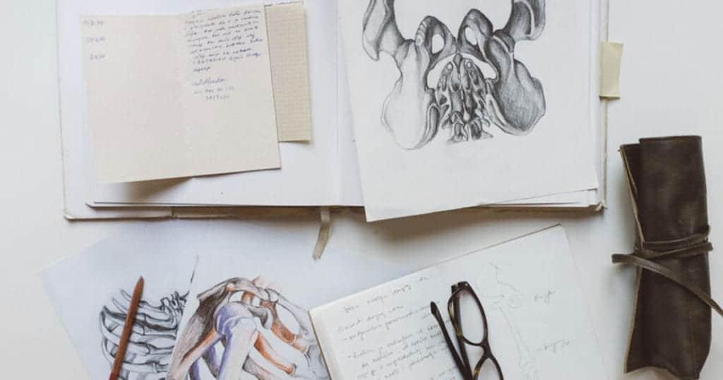 drawings of pelvis and ribs